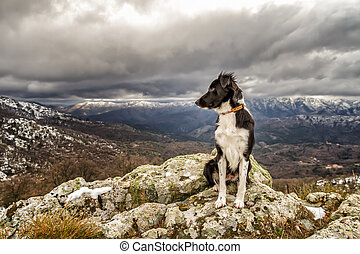 A border collie dog is sitting on a rocky outcrop with snow covered mountains in the distance