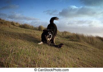 a border collie on a grass bank