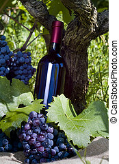 A bottle of red vine, grapes and vineyard - A bottle of red ...