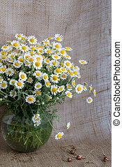 A bouquet of chamomiles in a glass vase on the background of burlap
