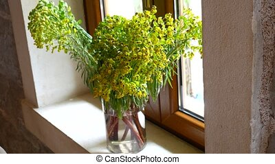 A bouquet of Euphorbia characias on the window in the restaurant