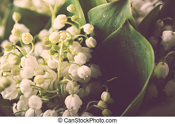 fresh lilies of the valley