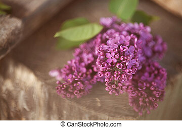 a bouquet of lilac , lilac flowers
