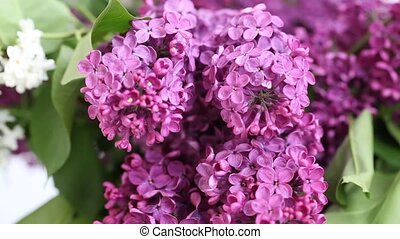 Lilac  - a bouquet of lilacs. Lilac
