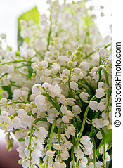 A bouquet of lilies of the valley on a white background