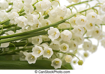 a bouquet of lily of the valley close-up