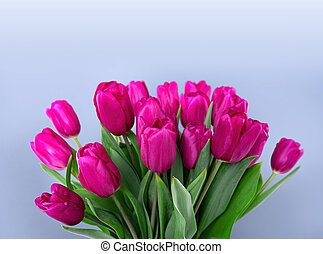 A bouquet of pink tulips on a blue background.