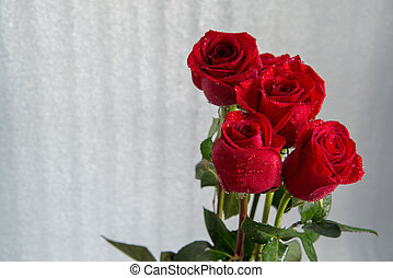 A bouquet of red beautiful roses on a white background