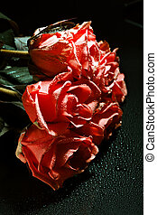 a bouquet of red roses with drops on a dark background
