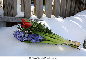 A bouquet of spring flowers lies in the snow