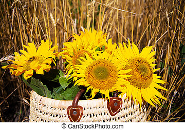 A bouquet of sunflowers lies in a straw bag on a large wheat field.