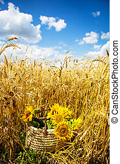 A bouquet of sunflowers lies in a straw bag on large wheat field.