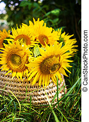 A bouquet of sunflowers lies in a straw bag on the green grass.