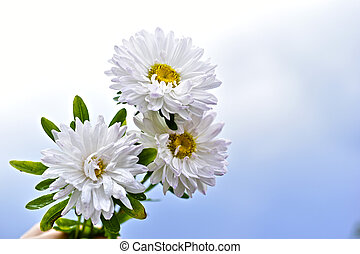 A bouquet of white chrysanthemums against a white sky