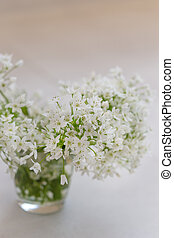 A bouquet of white spring flowers