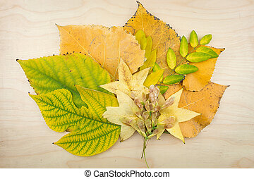 A bouquet of yellow, green autumn leaves and seeds.