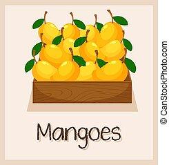 a, boxas, fyllda, av, mangoträd