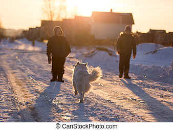 A boy with a dog in the rays of a sunset on the snow