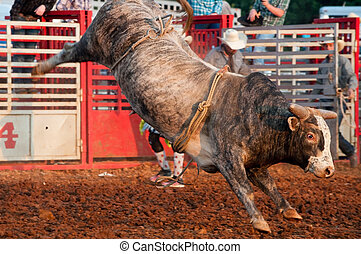 A brahma bull without a rider in a rodeo.