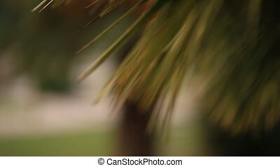 A branch of a palm tree close-up