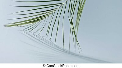 A branch of an green tropical palm tree slowly turns around...