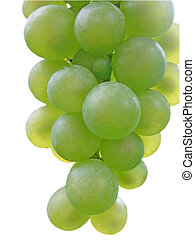A branch of green grapes.