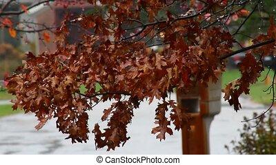 A branch of Oak leaves