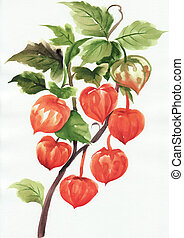 A branch of physalis, original style watercolor painting.