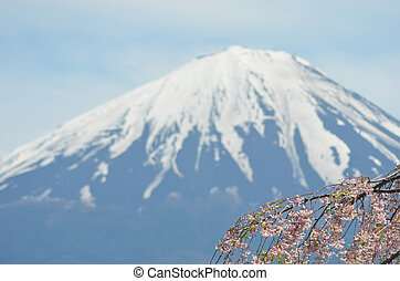 A branch of pink cherry blossom drapes across the corner of the photograph, with the cone of Mt Fuji in the distance.