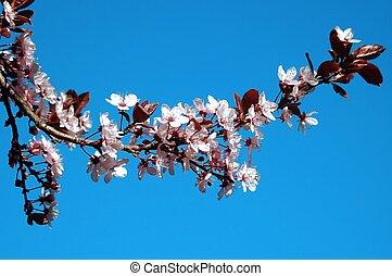 branch of plum
