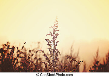A branch of wormwood illuminated by the sun on a foggy field