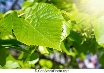 a branch with leaves and sun