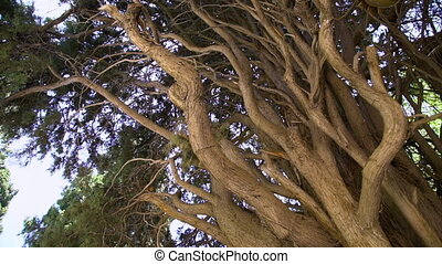 A branched brown tree trunk