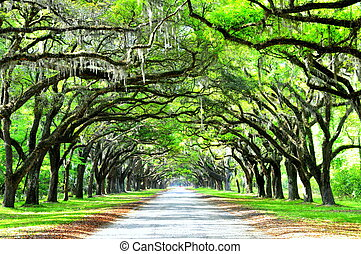 A breathtaking road sheltered by live oak trees and Spanish moss near Wormsloe Historic Site, Georgia, U.S