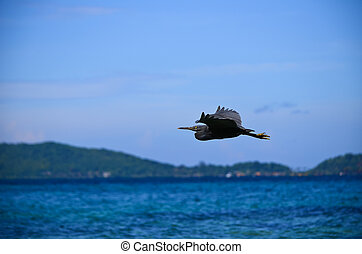 A brid flying over the sea