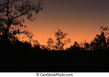 a bright sunset in the Australian bush