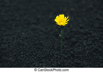A bright yellow flower grows out of the ground. New life concept