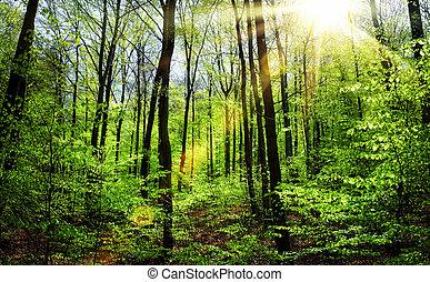 a, brilhar sol, através, spring's, fresco, foliage