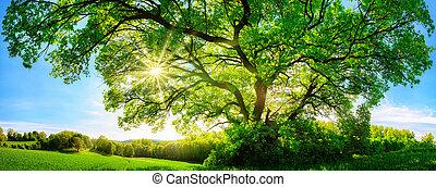 a, brilhar sol, através, um, majestoso, árvore carvalho