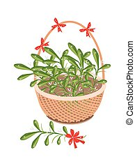 A Brown Basket of Mistletoe with Red Bow