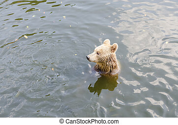 Bear sits on a river.