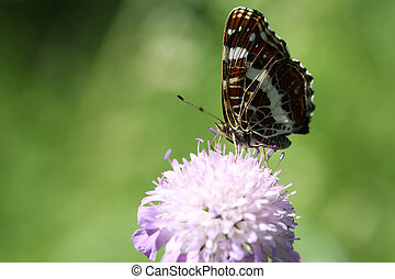 A brown butterfly sitting on a flower