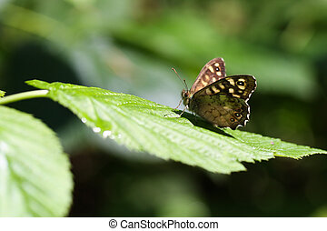 A brown butterfly sitting on a green leaf