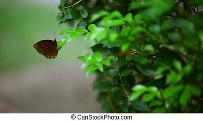 A brown butterfly sitting on the leaf of a plant.