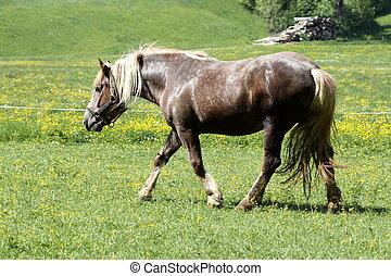 a brown cart-horse