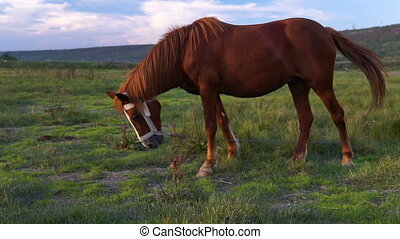 A brown horse grazing in a wild nature