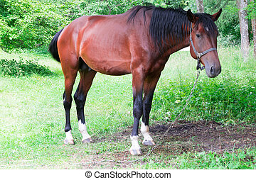 a brown horse in a garden
