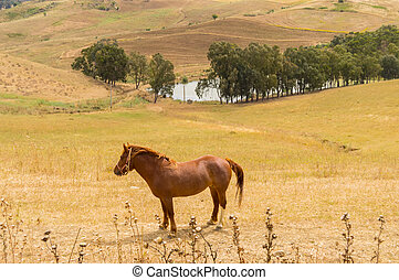 A brown horse in a meadow above a body of water and crops
