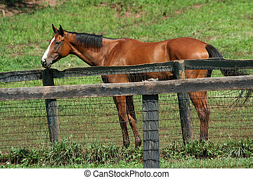 Brown horse standing near a fence