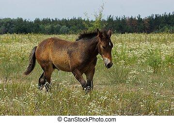 a brown horse walks along a tall green grass